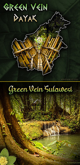 NEW: GREEN VEIN DAYAK & GREEN VEIN SULAWESI