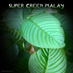 Super Green Malay, Hybrid Stimulating & Relaxing Kratom Aromas
