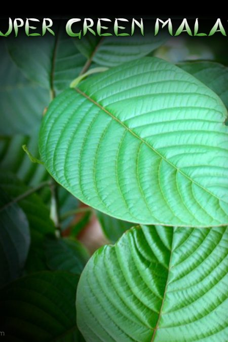 Super Green Malay, Hybrid Stimulating & Relaxing Kratom Aromas