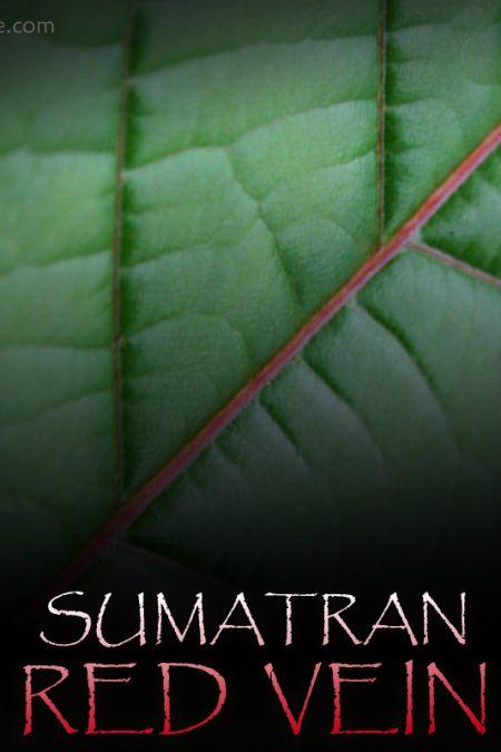 Sumatra Red Vein Kratom