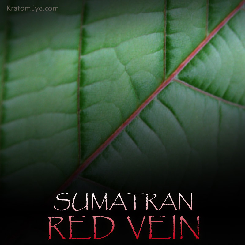 Sumatran Red Vein