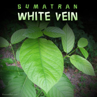 Sumatran White Vein Kratom, Stimulating, Energetic, Nootropic