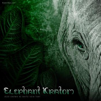Elephant Kratom, White Vein Thai
