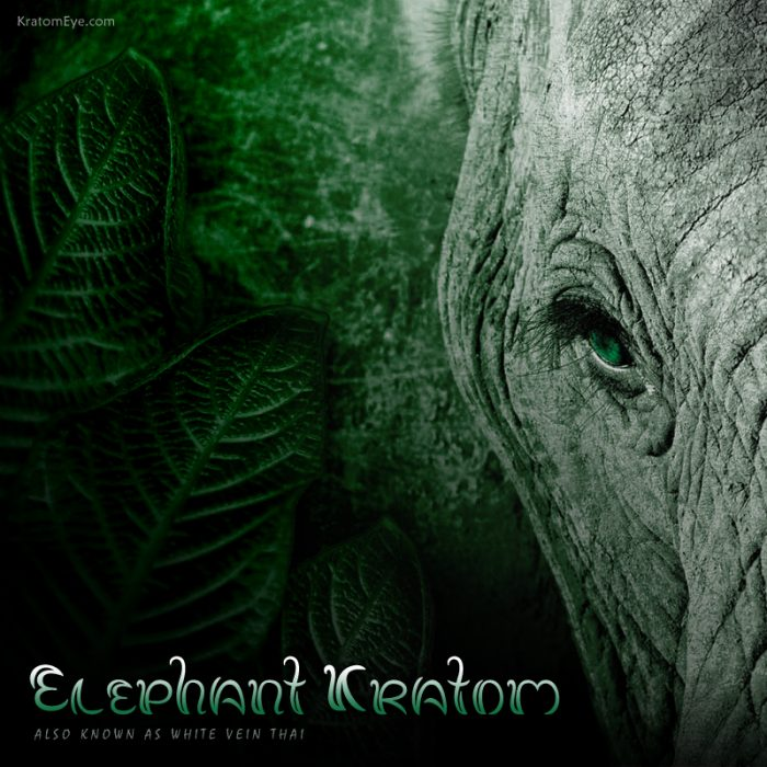 Elephant Kratom, White Vein Thai