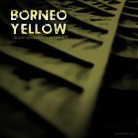 Borneo Yellow Vein Kratom, Rare Strain