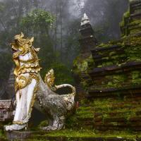 thai green vein