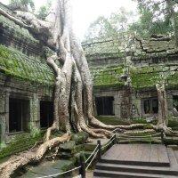 thailand green vein