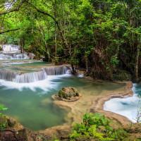 Thai Jungle Kratom