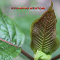 Relaxing Kratom Strains, Red, Green & Yellow Veins