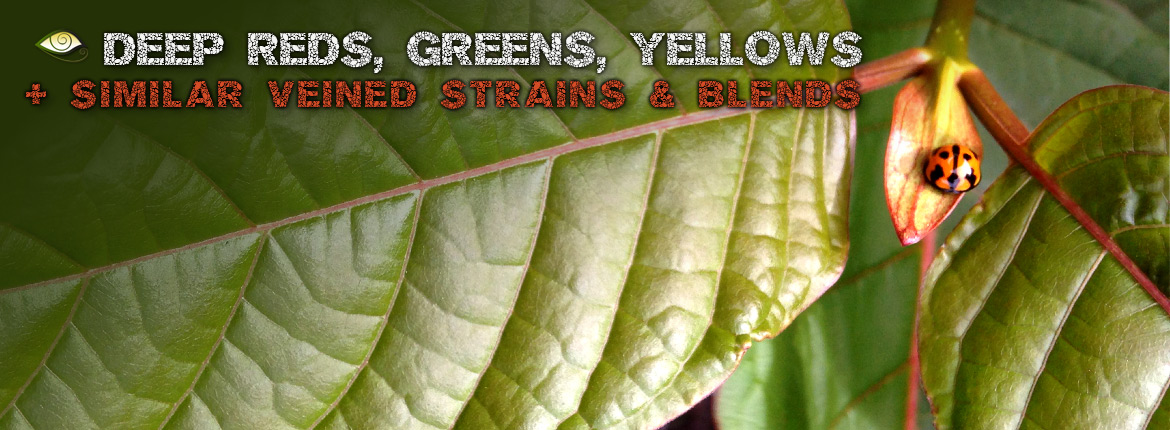 Best Deep Red Yellow Green Veined Kratom, Strains Blends Exclusives