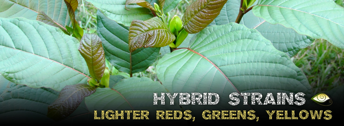 Hybrid Kratom Strains - Lighter Greens, Reds & Yellow Veins, Veined
