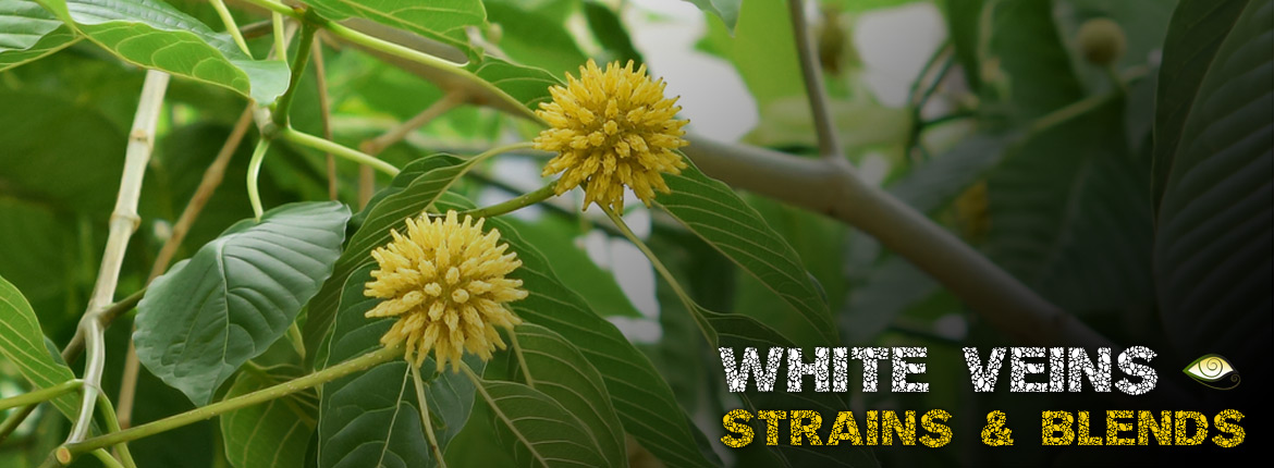 Best White Veins & Lighter Kratom Strains