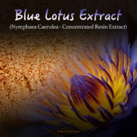 Egyptian Blue Lotus Extract (100x Super Concentrated) - Nymphaea Caerulea - Kratom Alternatives