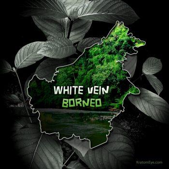 White Vein Borneo Kratom - Highest Quality