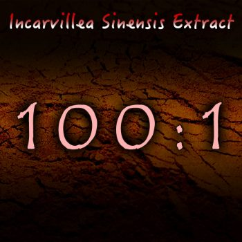 Incarvillea Sinensis 100:1 Extract - Herbal Pain, Insomnia, Anxiety Support