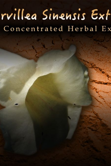 Incarvillea Sinensis 20:1 Extract - Herbal Pain, Insomnia, Anxiety Support