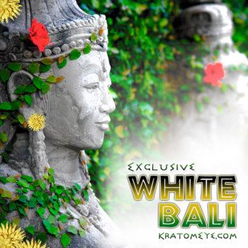 Exclusive White Vein Bali Kratom, Best, Highest Quality