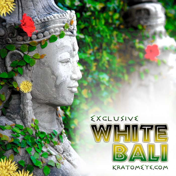 Exclusive White Vein Bali Kratom, Best, Highest Quality