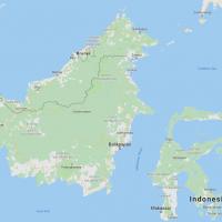 Dayak Kratom, Borneo, Special Strains
