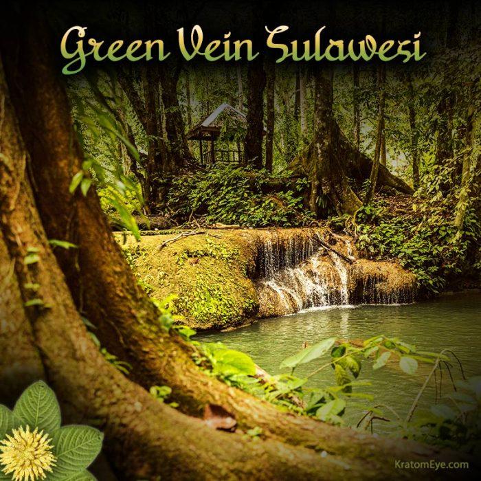 Green Vein Sulawesi Kratom, Rare & Special Strain