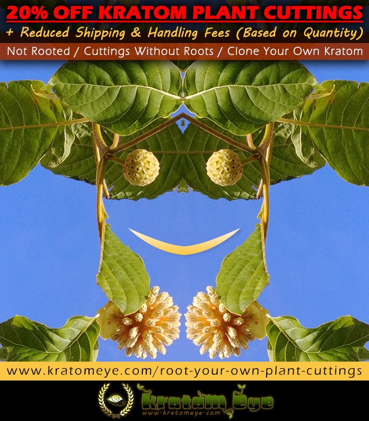 20% OFF Kratom Plant 'Cuttings' & Reduced Shipping!
