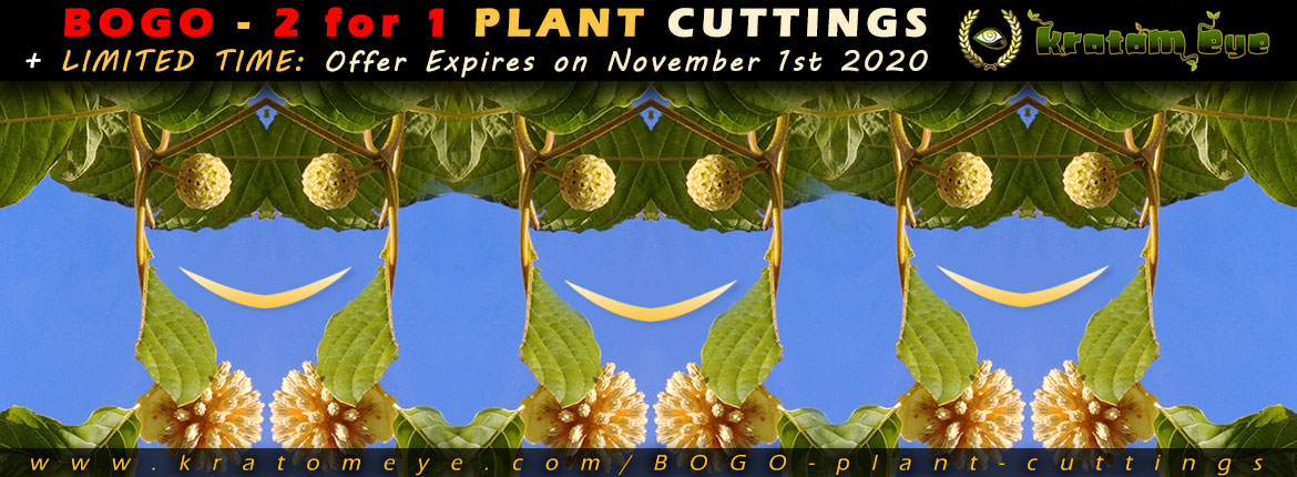 2 for 1 Kratom Plant Cutting Promotion - Buy 1 Get 1 Free