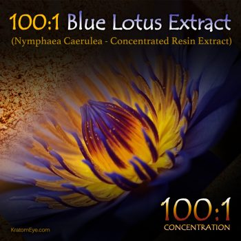 100:1 Blue Lotus Extract (Super Concentrated) - Nymphaea Caerulea - Kratom Substitutes