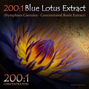 200:1 Blue Lotus Extract (Super Concentrated) - Nymphaea Caerulea - Kratom Substitutes