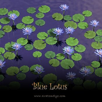 Blue Lotus Flower Extract