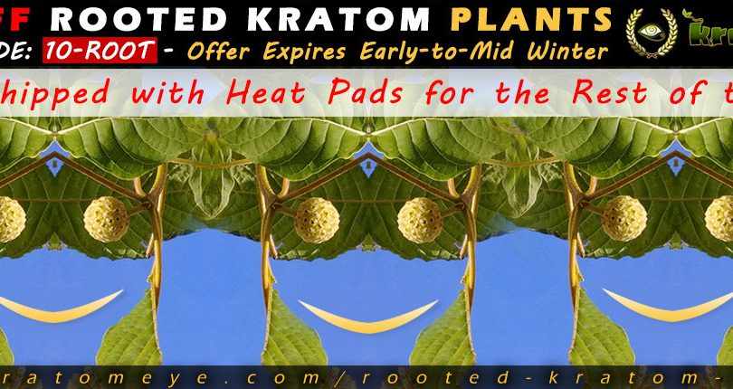 10% OFF Discount Sale Rooted Kratom Plant, Tree