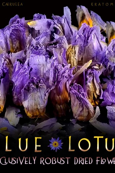 Exclusively Robust Dried Blue Lotus Flowers - Nymphaea Caerulea