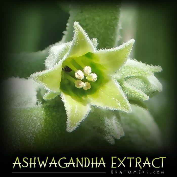 Ashwagandha Extract (Withania somnifera)