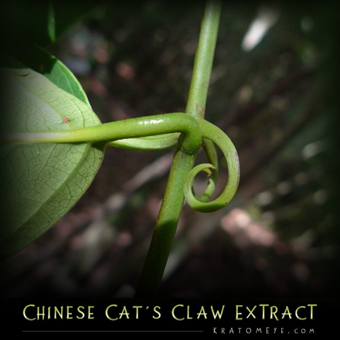 Chinese Cat's Claw Extract (20:1 Concentration) - Uncaria Rhynchophylla