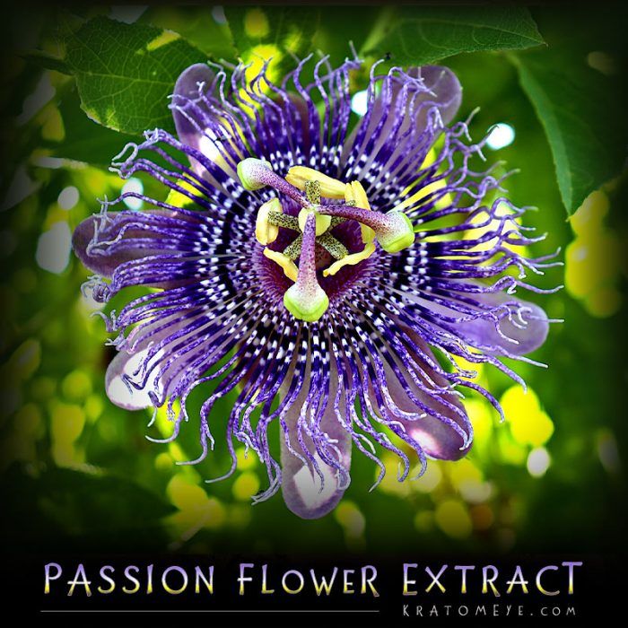 Passion Flower Extract (20:1 Concentration) - Passiflora Incarnata