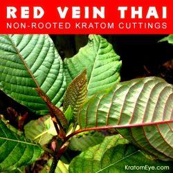 Live Kratom Cuttings - Red Vein Thai Strain