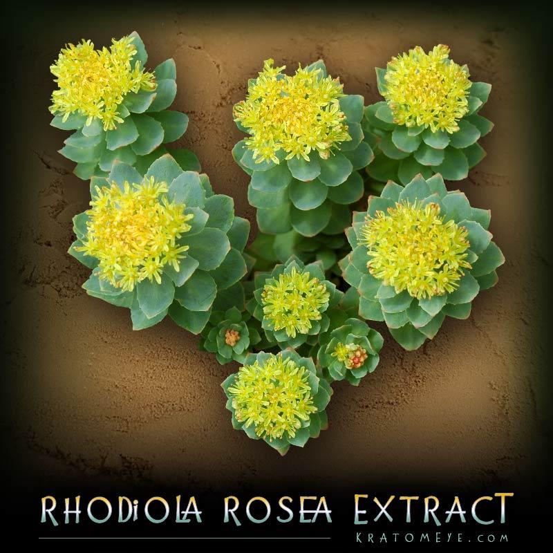 Rhodiola Rosea Extract (3%Rosavins)