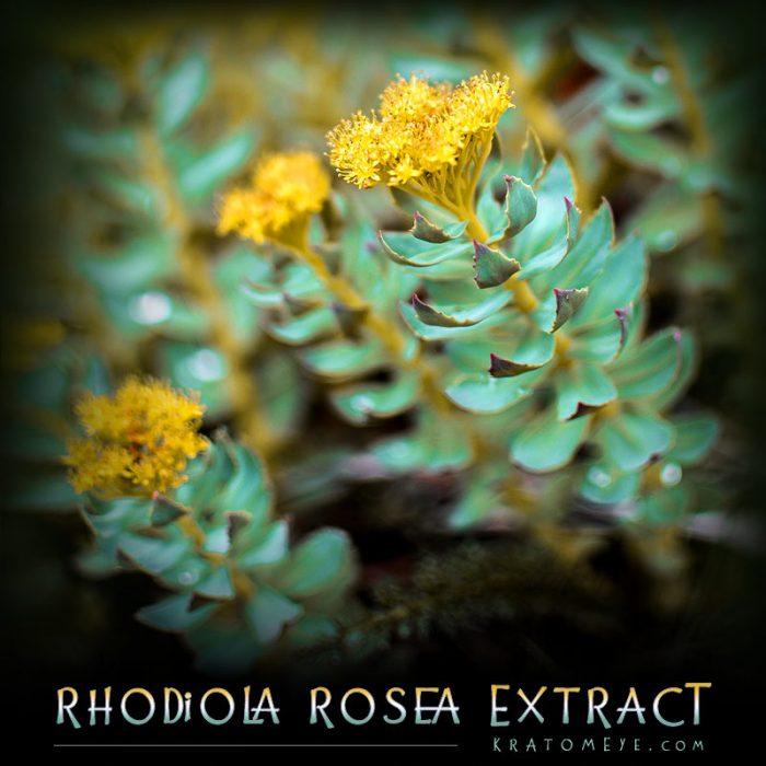 Rhodiola Rosea Extract (3% Rosavins)