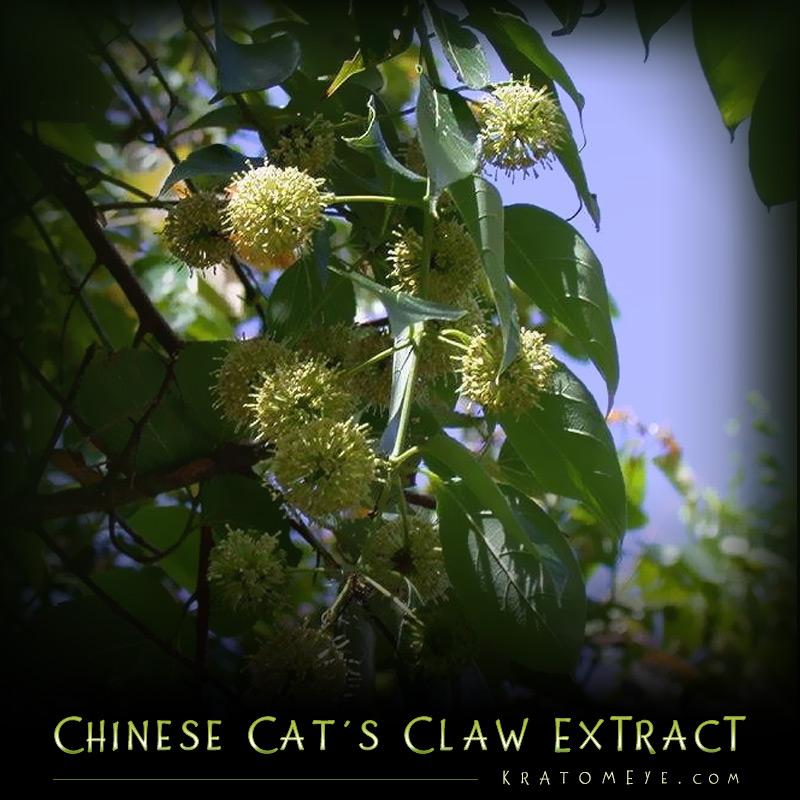 Chinese Cat's Claw - aka Gou-Teng - Uncaria Rhynchophylla